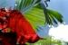 st_lucia_flower